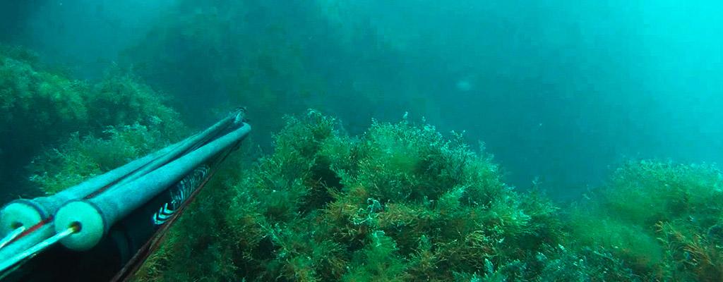 Подводная охота в Астрахани доступна каждому