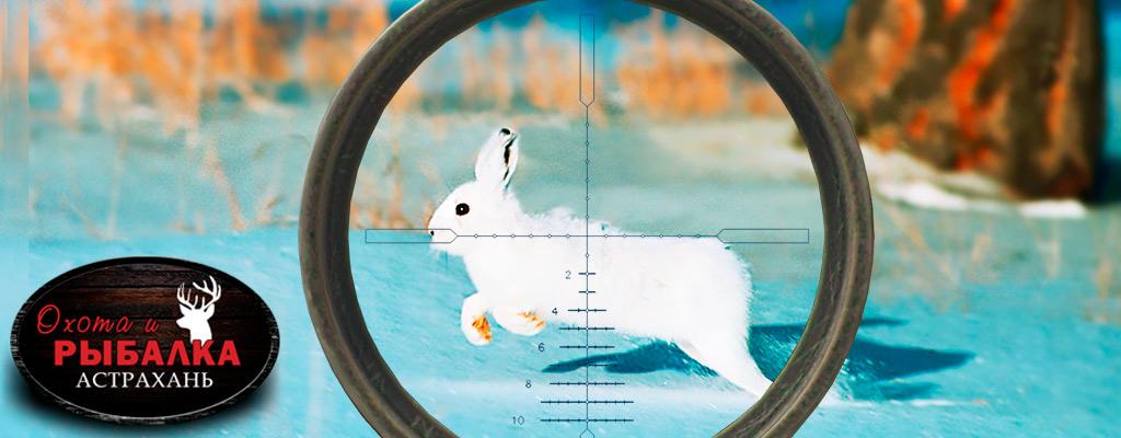 Охота на зайца в Астрахани отдых для настоящих добытчиков